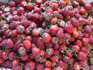 Larriland Berries