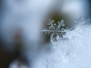 snowflake, liberal, politics